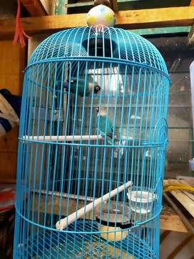 Sale burung peliharaan