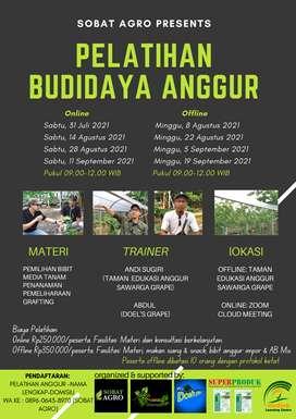 Pelatihan Budidaya Anggur untuk Pemula (online & offline)
