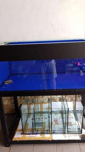 Aquarium Arwana