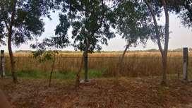 Tanah Dijual daerah Pakal Surabaya