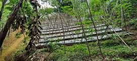 Dijual Murah Tanah 2400 m2 Kebun dan Pertanian di Darangdan Purwakarta