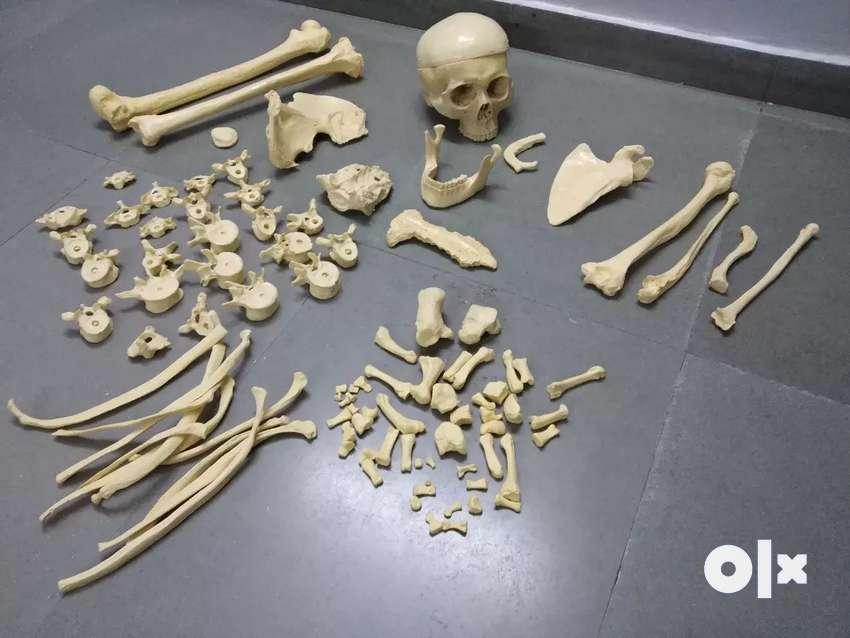 Artificial bone set 0