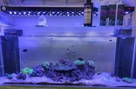 Jual satu set akuarium air laut