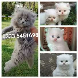 Lovely Baby's available