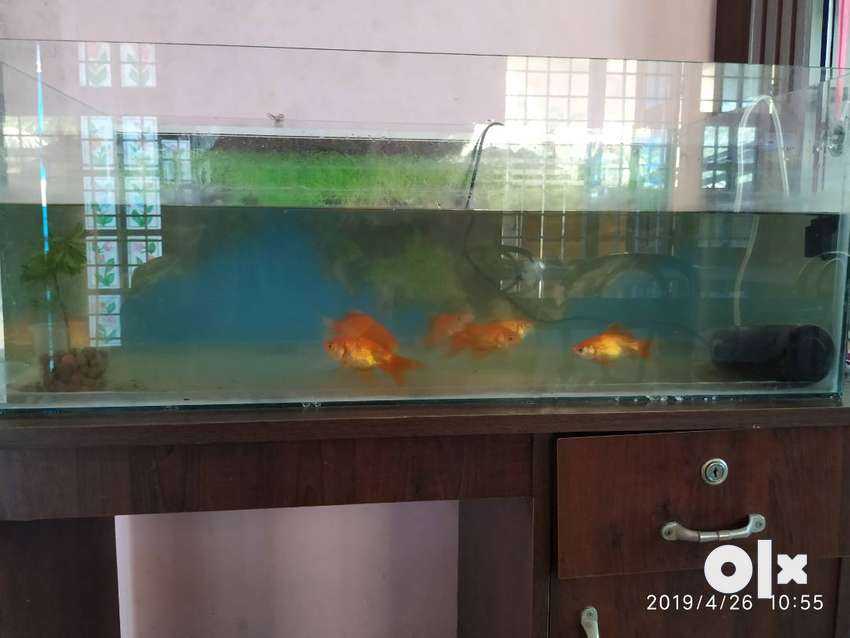 Best fish aquarium 0