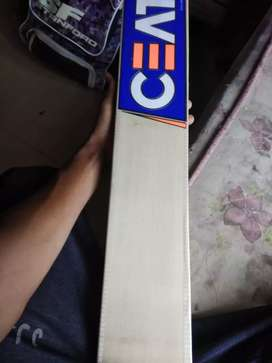 CEAT English willow cricket bat players edition