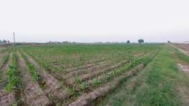 Agriculture Land For Sale In Luban Wala Tehsil Ferozwala Sheikhupura