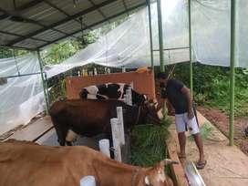 JOB IN FARM