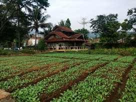 Tanah Bonus Villa Termurah