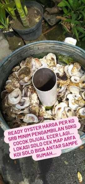 Media filter oyster cangkang kerang sudah bersih
