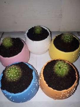 Anak kaktus mini untuk dijual (DISKON)