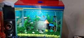 Aquarium with full setup