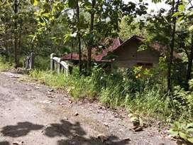 Tanah 2,500m, muka 55m bonus rumah rangka jati,Pundungrejo tawangsari