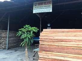 Jual kayu kelapa dan Gelam / Dolken
