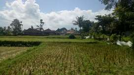Disewakan Tanah Di Ubud Singekerta 8 Menit Menuju Central Ubud