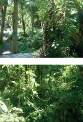 Tanah Kosong Desa Taman @Bali (AJB)