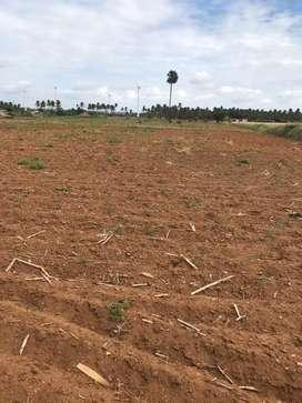 Agriculture land/agricultural land/agriland/farm land/farm house/land