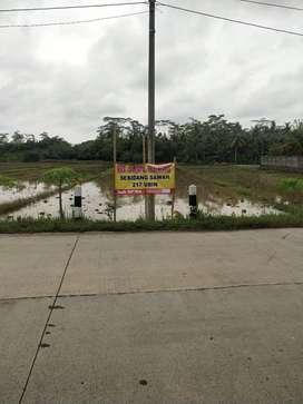 Sawah Pinggir Jl Raya