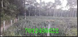 15 cent house plot in manarcadu