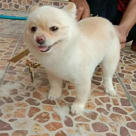Pet grooming panggilan anjing dan kucing