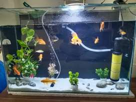 Aquarim for sale