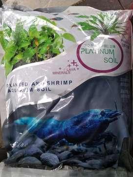 Plataniyam planted aquarium soil