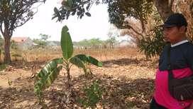 Tanah murah cikampek karawang