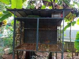Metal love birds cage are available