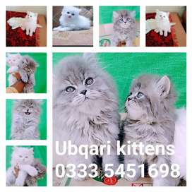 Cüte and Adorable kids available