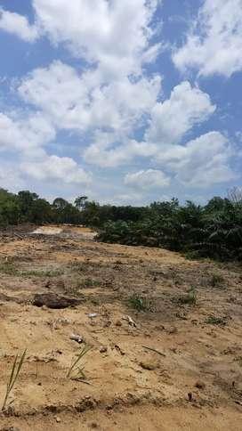 Kavling Kebun Lengkeng Riau