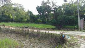 Selling 2 Katha Myadi patta plot near NEIST (RRL) Jorhat