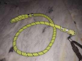 Dogs new belt