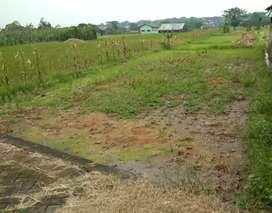 Di jual tanah sawah murah dekat Tamandayu
