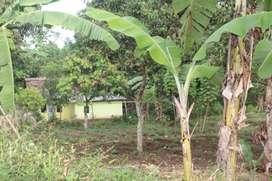 Tanah Murah Ciparay