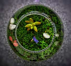 Terrarium Plant Ecosystem