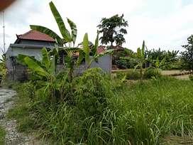 Dijual Murah Tanah Kavling 90 M2 di Batuyang, Batubulan