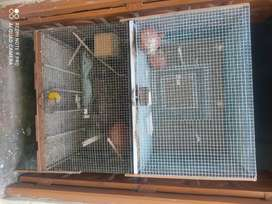 2 Cage with tray size 3*2*2 Available for small pets
