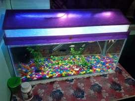 NewFish Aquarium new