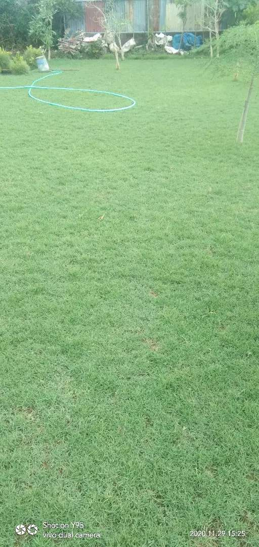 Jual rumput +pasang 0