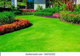 Ali nursery plants and decoration services