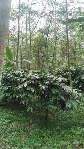 Bu Jual Tanah Perkebunan ada kopi dll
