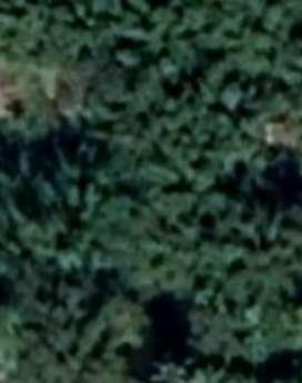 চাৰিগাওঁ কাঠনীয়াকুৰিত 2.5 কঠা ম্যদী মাটি  ৷মো নং ৮৪৮৬৮২৩৩৫২