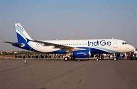 INDIGO AIRLINE Recruitment Ground Staff on roll Job INDIGO AIRLINE Rec
