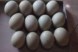 Telur bebek  fresh