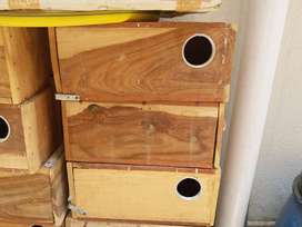 Love Birds Breeding Box Keekar k lakri k (read add carefully))