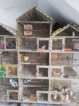 Cage(large size) with some pairs of parrots