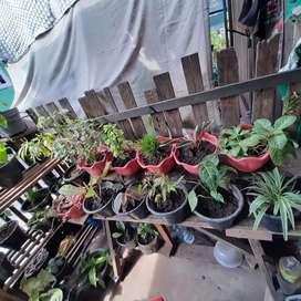 Beraneka ragam tanaman hias