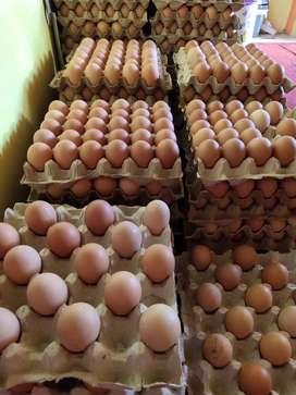 Telur ayam super payakumbuh