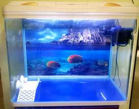 Fish equrium tank 20×27 15 deep (no time.paas )
