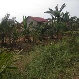 Tanah Kosong untuk Pertanian